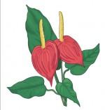Blumenstube Sonja